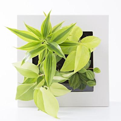 【店舗限定】壁にかけられる観葉植物 16×16cm