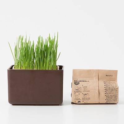 【ネット限定】瀬戸焼 磁器角鉢 ブラウン・猫草栽培セット付き
