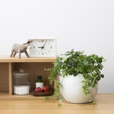 植物の水やりが簡単な二重構造の底面給水型のポットと、育てやすいグリーンのセットです。