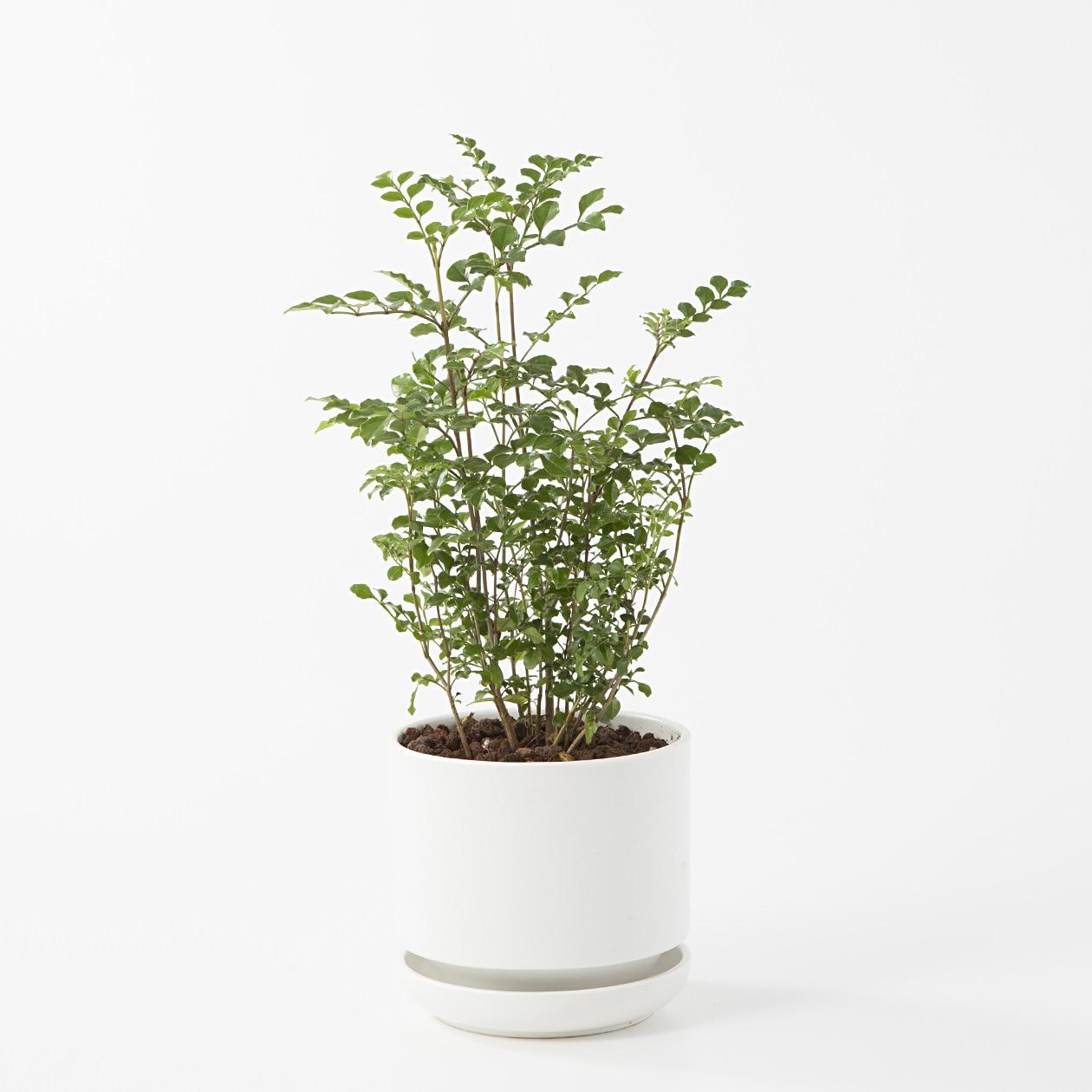 【ネット限定】瀬戸焼の鉢 トネリコ 4号