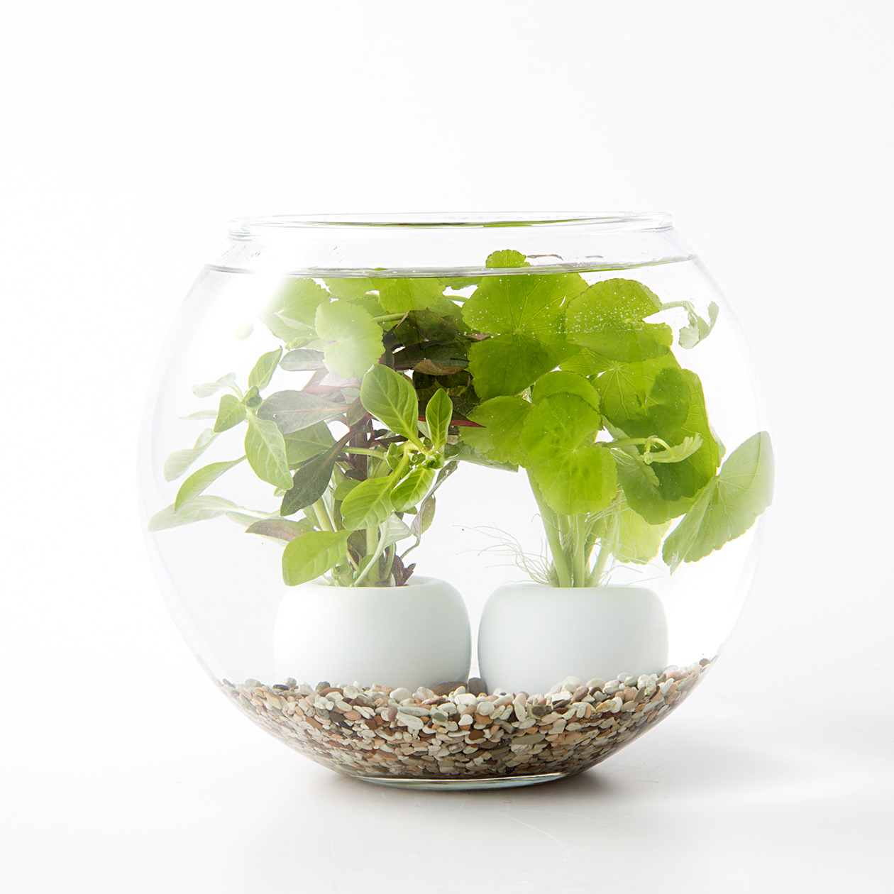 【ネット限定】水中の植物とガラスベースセット A