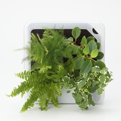 壁にかけられる観葉植物
