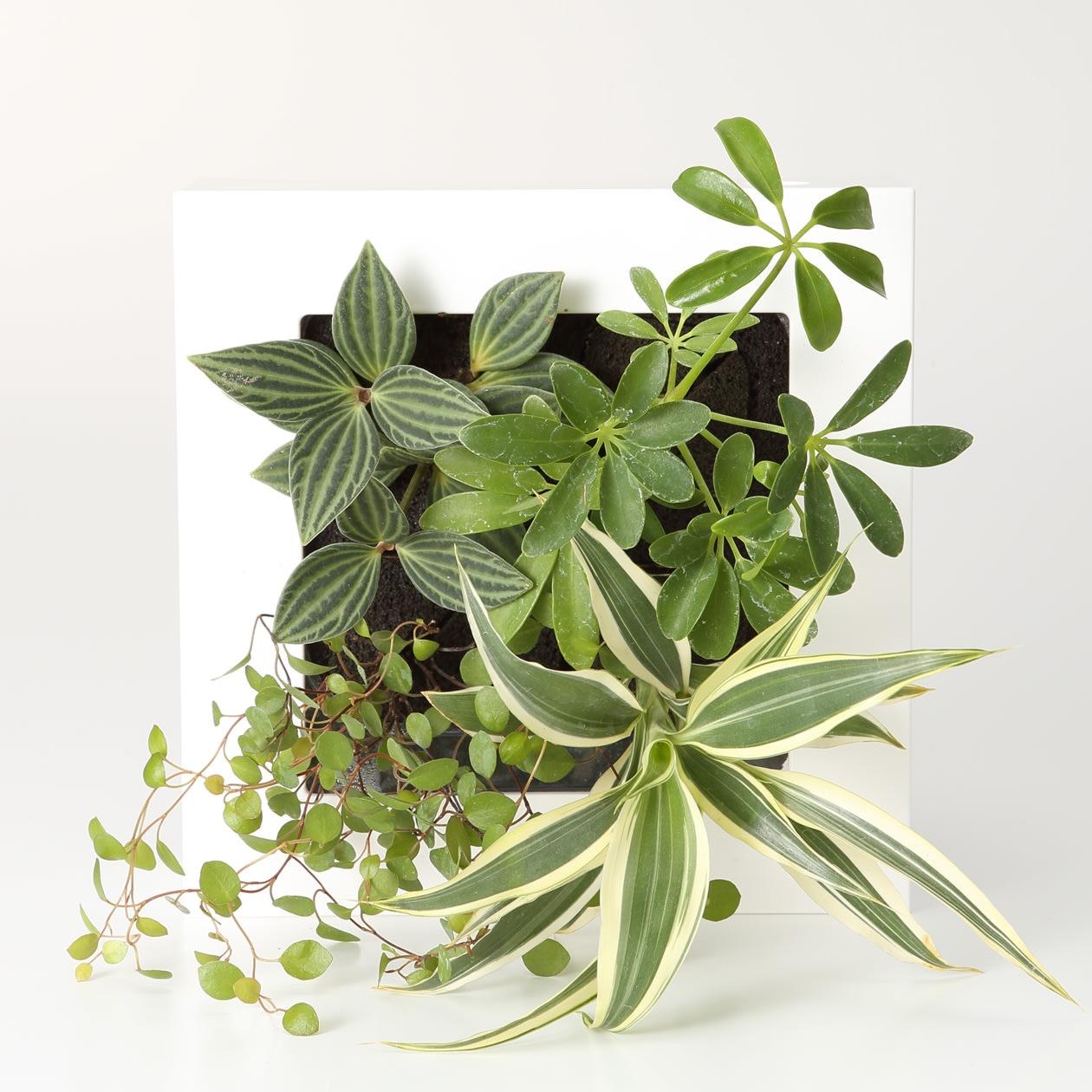 壁にかけられる観葉植物 16×16cm