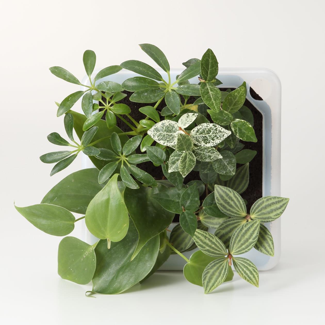 壁にかけられる観葉植物 半透明