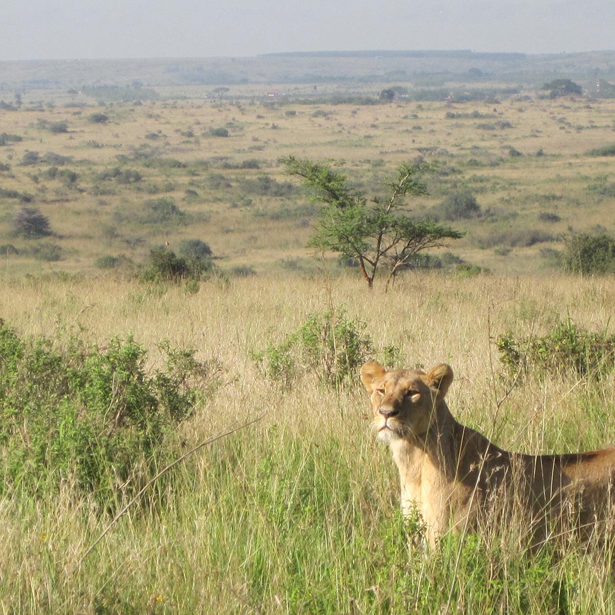 絶滅の恐れがある生きものの保護活動支援