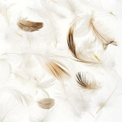 0af55c9a4f へたりの少ない水鳥の羽根は、適度な弾力性を持ち、やわらかな感触です。